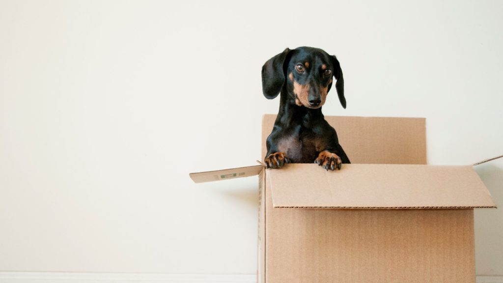 dog in a box out of the bedroom - home cleaning tips to help reduce asthma